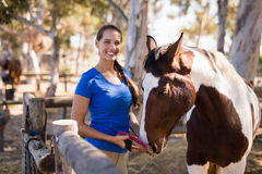 Portrait of female jockey cleaning horse. While standing at paddock Royalty Free Stock Photography