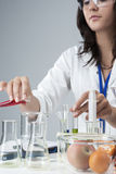 Portrait of Female Lab Staff Dealing With Flasks and Its Substances Stock Photo