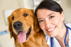 Vet with a cute dog Royalty Free Stock Image