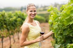 Portrait of female vintner holding wine glass and inspecting grape crop Royalty Free Stock Photos