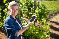 Portrait of female vintner using digital tablet in vineyard. On a sunny day Stock Image