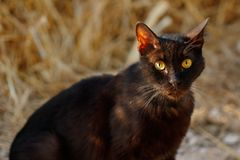Portrait of feral black-brown cat in the countryside Stock Photography