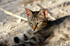 Portrait of feral brown-grey striped cat in the countryside Stock Images