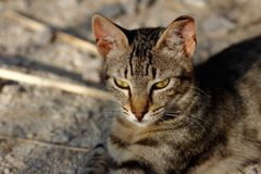 Portrait of feral striped cat in the countryside Stock Photos