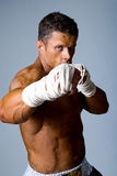 Portrait of the fighter Royalty Free Stock Image