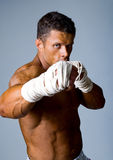 Portrait of the fighter Royalty Free Stock Photography