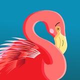 Portrait of a flamingo Stock Photography