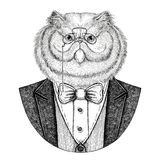 Portrait of fluffy persian cat Hipster animal Hand drawn illustration for tattoo, emblem, badge, logo, patch, t-shirt vector illustration