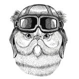 Portrait of fluffy persian cat wearing leather helmet Aviator, biker, motorcycle Hand drawn illustration for tattoo Stock Photos