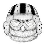 Portrait of fluffy persian cat Wild animal wearing rugby helmet Sport illustration Royalty Free Stock Image