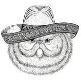 Portrait of fluffy persian cat Wild animal wearing sombrero Mexico Fiesta Mexican party illustration Wild west. Wild animal wearing sombrero Mexico Fiesta royalty free illustration