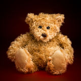 Portrait of a Fluffy Teddy Bear Royalty Free Stock Photography