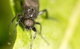 Portrait of a fly on a green leaf. close.  Royalty Free Stock Photography