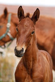 Portrait of a foal stock images