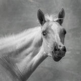 Portrait of a foal Royalty Free Stock Photos