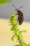 Portrait of a forest beetle. Studio shoot Royalty Free Stock Photo