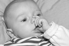 Portrait of  four months old baby Royalty Free Stock Photos
