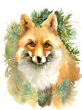 Portrait of a fox. With branches Stock Image