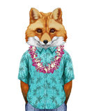 Portrait of Fox in  summer shirt with Hawaiian Lei. Stock Photos