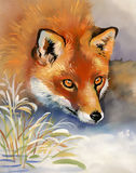 Portrait of a fox. Vintage watercolor winter Stock Images
