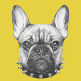 Portrait of French Bulldog with collar. Hand drawn portrait of French Bulldog with collar. Vector isolated elements Royalty Free Stock Photo