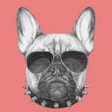 Portrait of French Bulldog with collar and sunglasses. Hand drawn portrait of French Bulldog with collar and sunglasses. Vector isolated elements Royalty Free Stock Photos