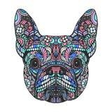 Portrait of French Bulldog vector illustration