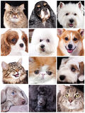 Portrait of funny animals,  set Royalty Free Stock Photo