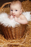 Portrait of funny baby in woven basket on pile of straw backgrou Stock Image