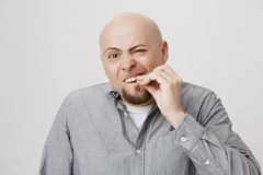 Portrait of funny bald caucasian man touching his tooth as if wanting to pull it out, standing with concentrated. Expression over gray background. Guy tries to Stock Photography