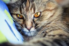 portrait of a funny cat royalty free stock photo
