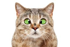 Portrait of funny cat with a fly on his nose royalty free stock photography