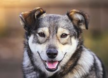 Portrait of funny dog puppy mutts smiling friendly. Portrait of cute funny dog puppy mutts smiling friendly Royalty Free Stock Images