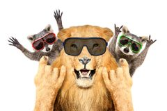 Portrait of a funny lion and two raccoon in sunglasses, showing a rock gesture stock images