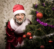 Portrait of funny Santa Claus. At Christmas tree Stock Photo
