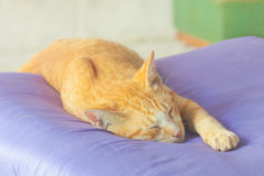 Portrait of funny sleeping cat face Stock Photography