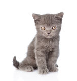 Portrait funny tiny gray kitten. isolated on white background Royalty Free Stock Images