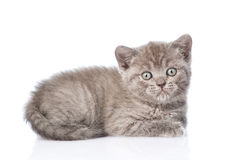 Portrait funny tiny gray kitten. isolated on white background Stock Images
