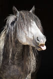 Portrait of funny wild horse Royalty Free Stock Photos