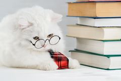 Portrait of furry cat in transparent round glasses. Domestic soigne scientist kitty in red tie poses on books background. In library. Education, science stock image