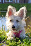 Portrait of furry white puppy in a park. Stock Photography