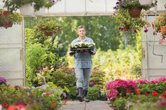 Portrait of gardener carrying crate with flower pots while entering greenhouse Royalty Free Stock Photography