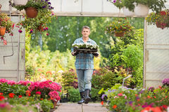 Portrait of gardener carrying crate with flower pots while entering greenhouse Stock Photos