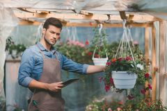 Gardener holding tablet in hands while standing in greenhouse. Portrait of gardener holding tablet in hands while standing in greenhouse Royalty Free Stock Images