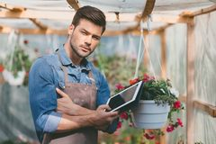 Gardener holding tablet in hands while standing in greenhouse. Portrait of gardener holding tablet in hands while standing in greenhouse Stock Image