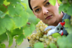 Portrait of a gardener Stock Photo