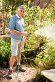 Portrait of gardener watering plants from hose at garden Royalty Free Stock Photography