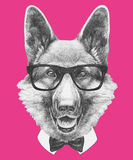 Portrait of German Shepherd with glasses and bow tie. Royalty Free Stock Images