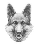 Portrait of German Shepherd. Hand drawn illustration Stock Images