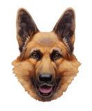 Portrait of German Shepherd. Hand-drawn illustration, digitally colored Stock Image